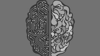 크랩 뇌과학 뇌신경연결